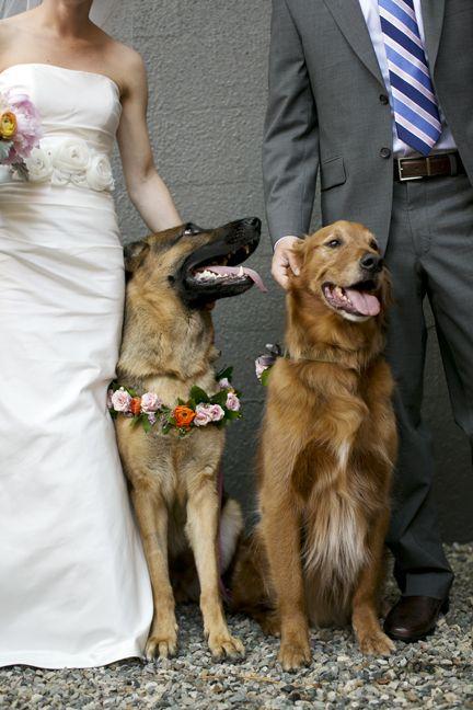 Fresh Floral Dog Collar For Wedding Dog Best Man Ring Bearer Dog