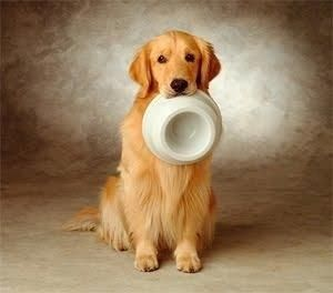 Hungry By Jo Dogs Golden Retriever Cool Dog Tricks Golden