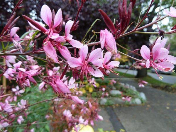 Gu a de jardiner a informaci n t nicas y consejos tiles part 8 flowers - Utiles de jardineria ...