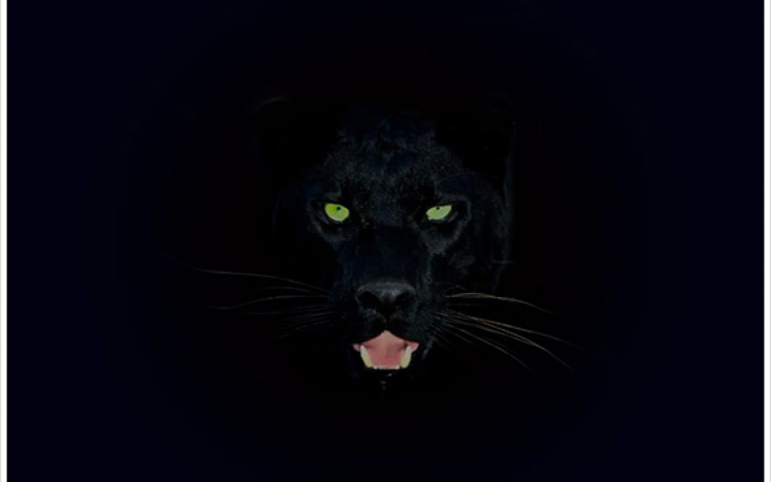 Animal Iphone 11 Animal Black Panther Wallpaper 4k