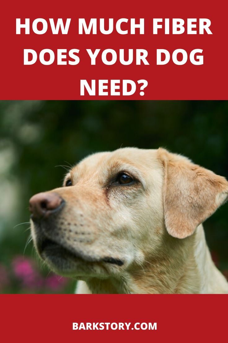 How much fiber should a dog have in their diet outdoor