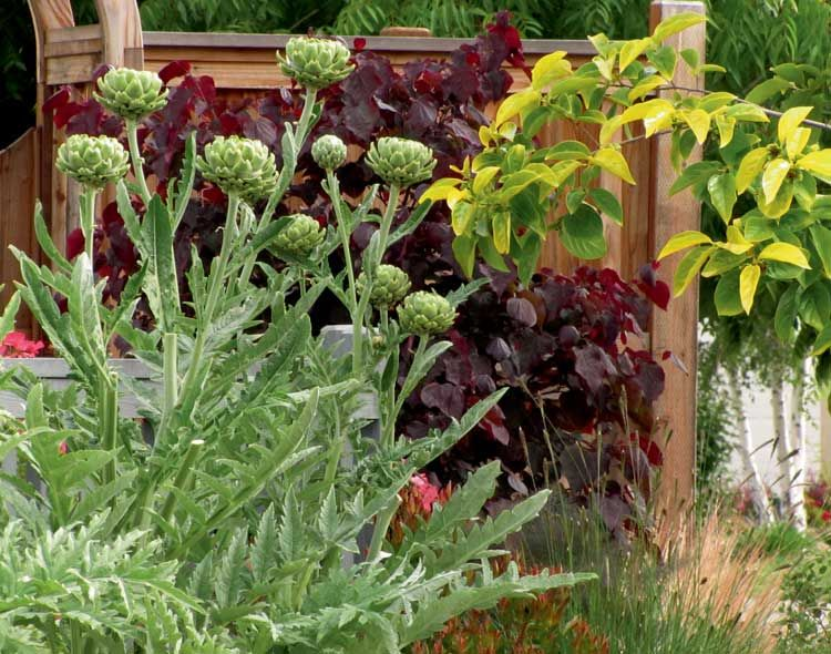 Front Yard Edible Garden Ideas design an edible landscape: turn your front yard into a beautiful