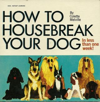 How To Housebreak Your Dog Mp3 S Your Dog House Breaking Pet