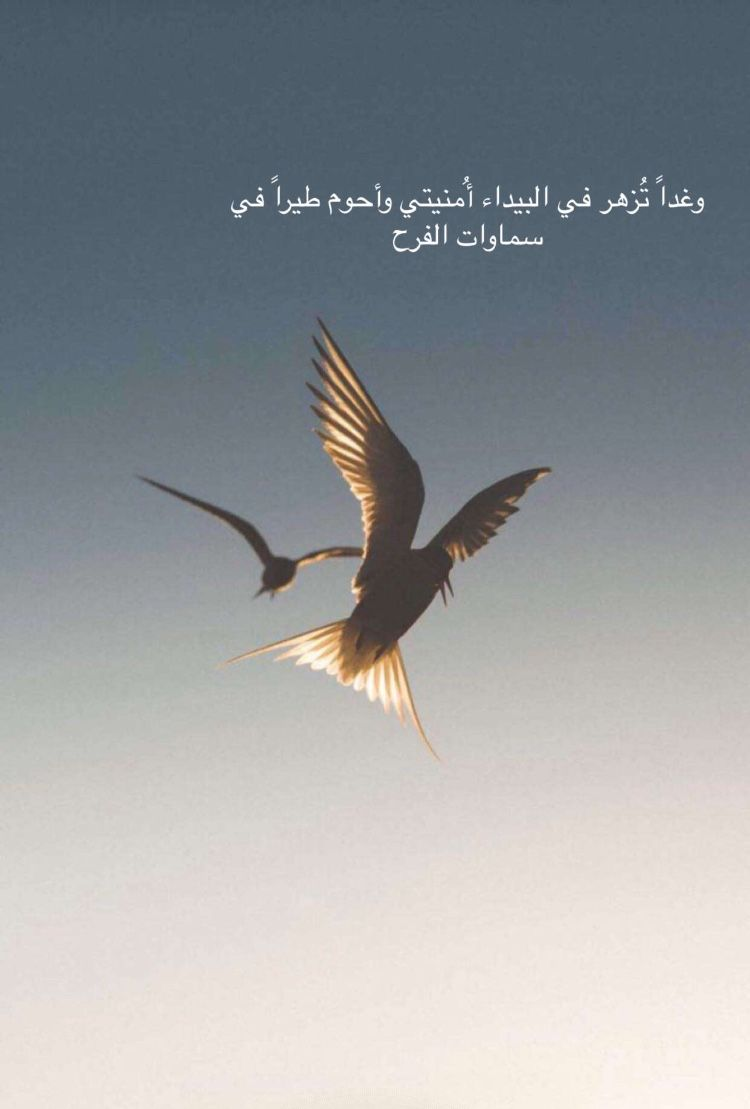 Arabic Quotes Beautiful Arabic Words Proverbs Quotes