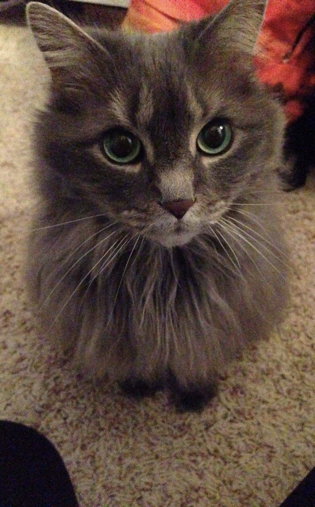 Its Been A Year Since My 16 Year Old Pretty Girl Passed Away Ill Never Forget Those Eyes Pretty Cats Kittens Cutest Beautiful Cats