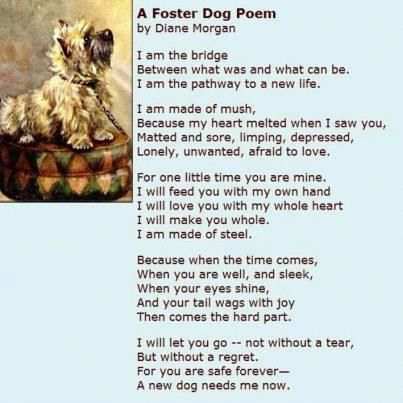 Pin By Molly Heydt On Animals Foster Dog Dog Poems The Fosters