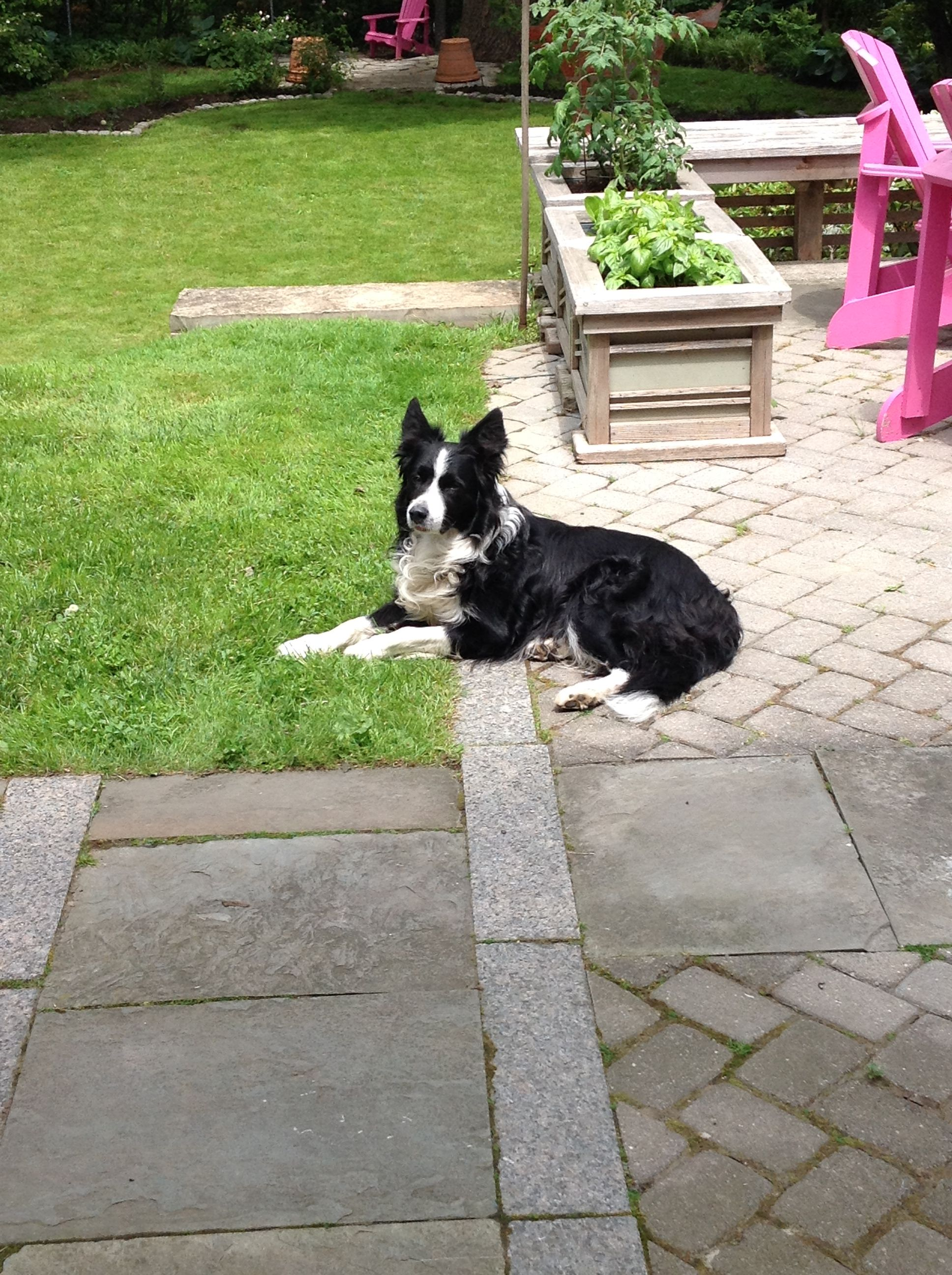 Pin by Colleen Chandler on Border Collies Best dogs