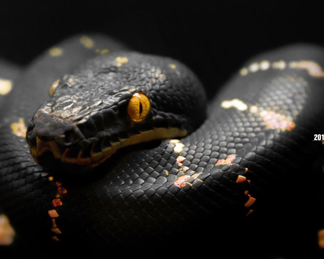 Snakes High Quality Wallpapers Snake wallpaper, Snake