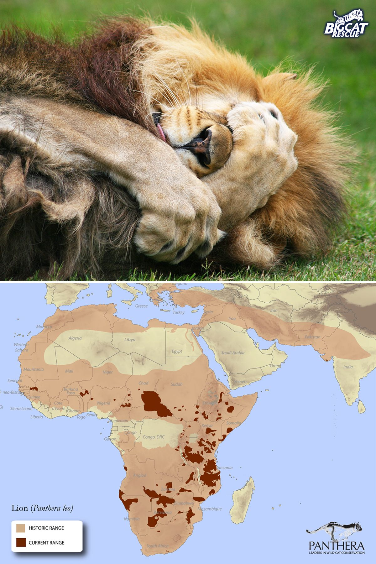 Pin by Big Cat Rescue on Wild animals Big cat rescue