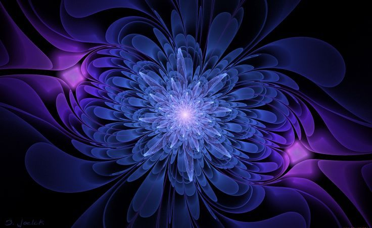 Black Background Blue And Serenevy Color Graphics Flower Wallpaper
