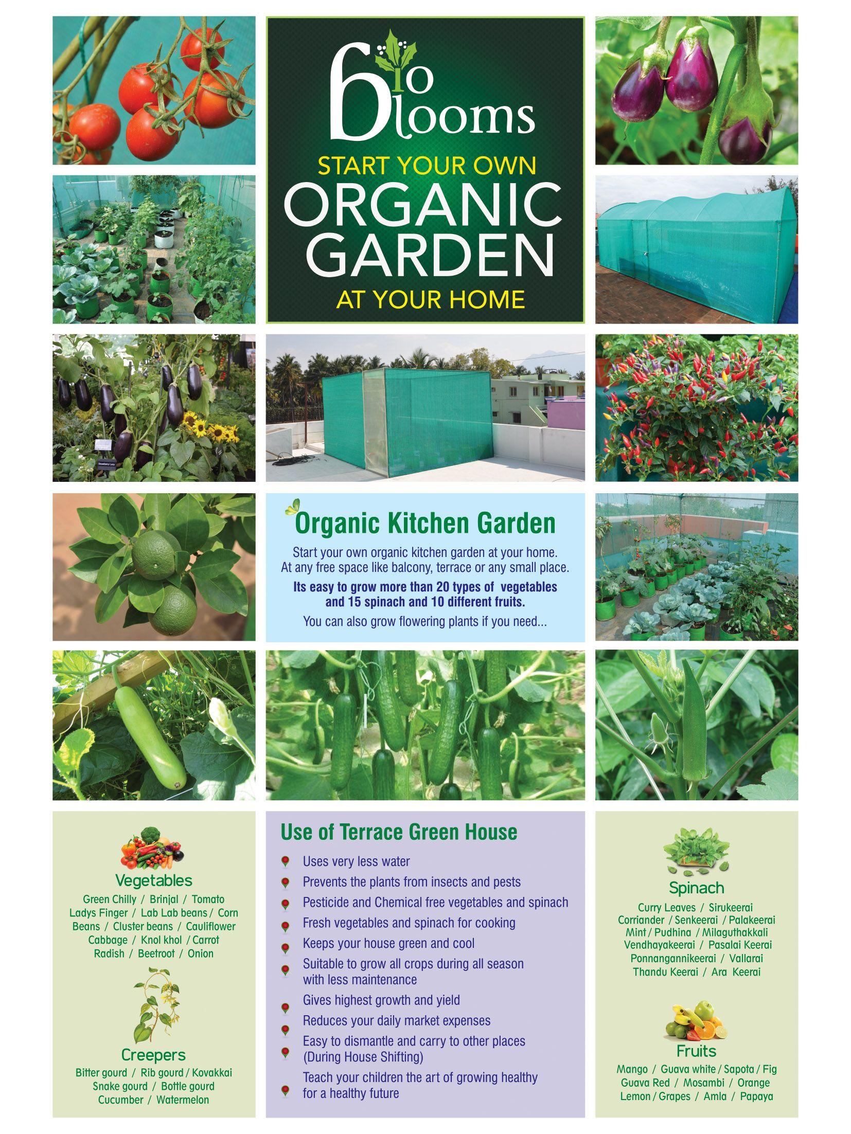 Terrace Garden Organic Kitchen Kitchen Garden Garden Services