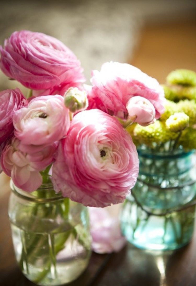 Pin by siriphin on flower pinterest flowers gardens and plants beautiful ranunculus in a jar these are nice relatively cheap spring or summertime flowers that look like roses and peonies but are not as pricey izmirmasajfo Choice Image