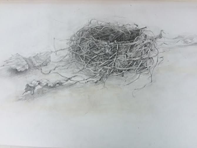graphite nest drawing by Betsey MacDonald | How to dry ...