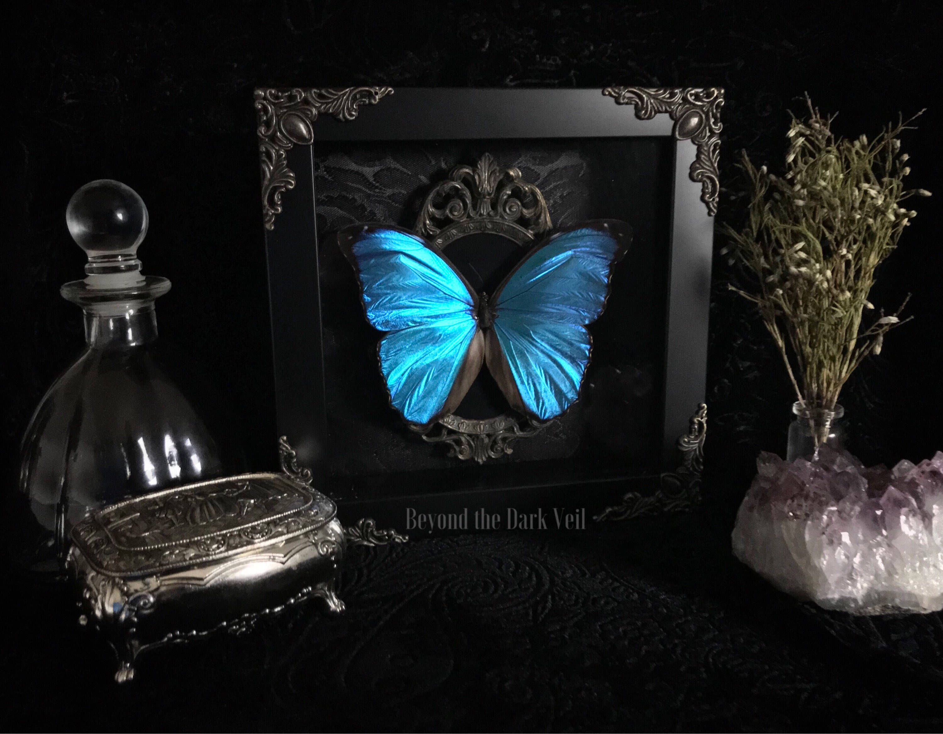 Victorian Blue Morpho Butterfly Shadow Box, Real Butterfly, Taxidermy, Framed  Butterfly, Victorian