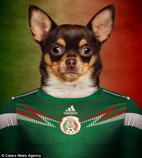 World Cup Teams National Dog Breeds For Show Of Canine Patriotism