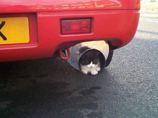 Exhaust Pipe - cats really will sleep anywhere