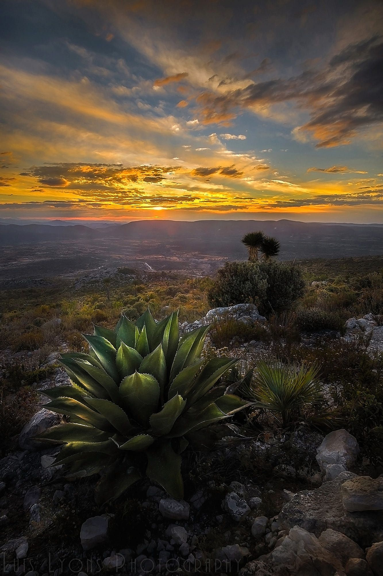 Agave Sunset Puebla Mexico California Landscape Mexico Wallpaper Nature Photography Hd wallpaper sunset desert trees bushes