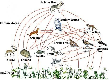 Animales Y Su Alimentación Red Trofica Ecosistemas Tatuajes De Parejas Enamoradas