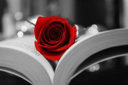 رمزيات ايفون ورد احمر Bo7 Net500 334buscar Por Imagen رمزيات ايفون ورد احمر Beautiful Rose Flowers Love Rose Flower Book Flowers