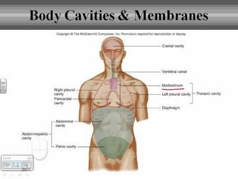 Chapter 1 body organization body cavities ota school chapter 1 body organization body cavities ccuart Images