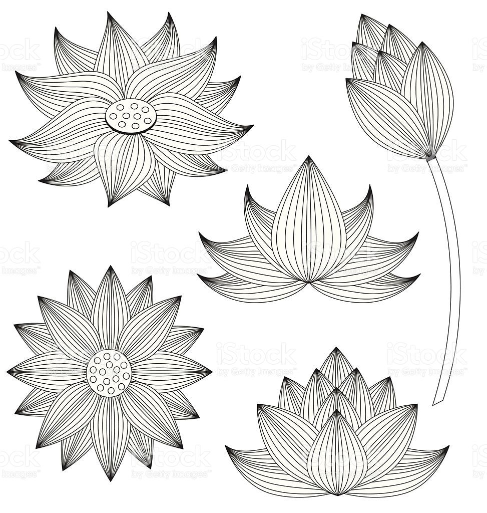 Lotus flower vector set on white background Lotus flower