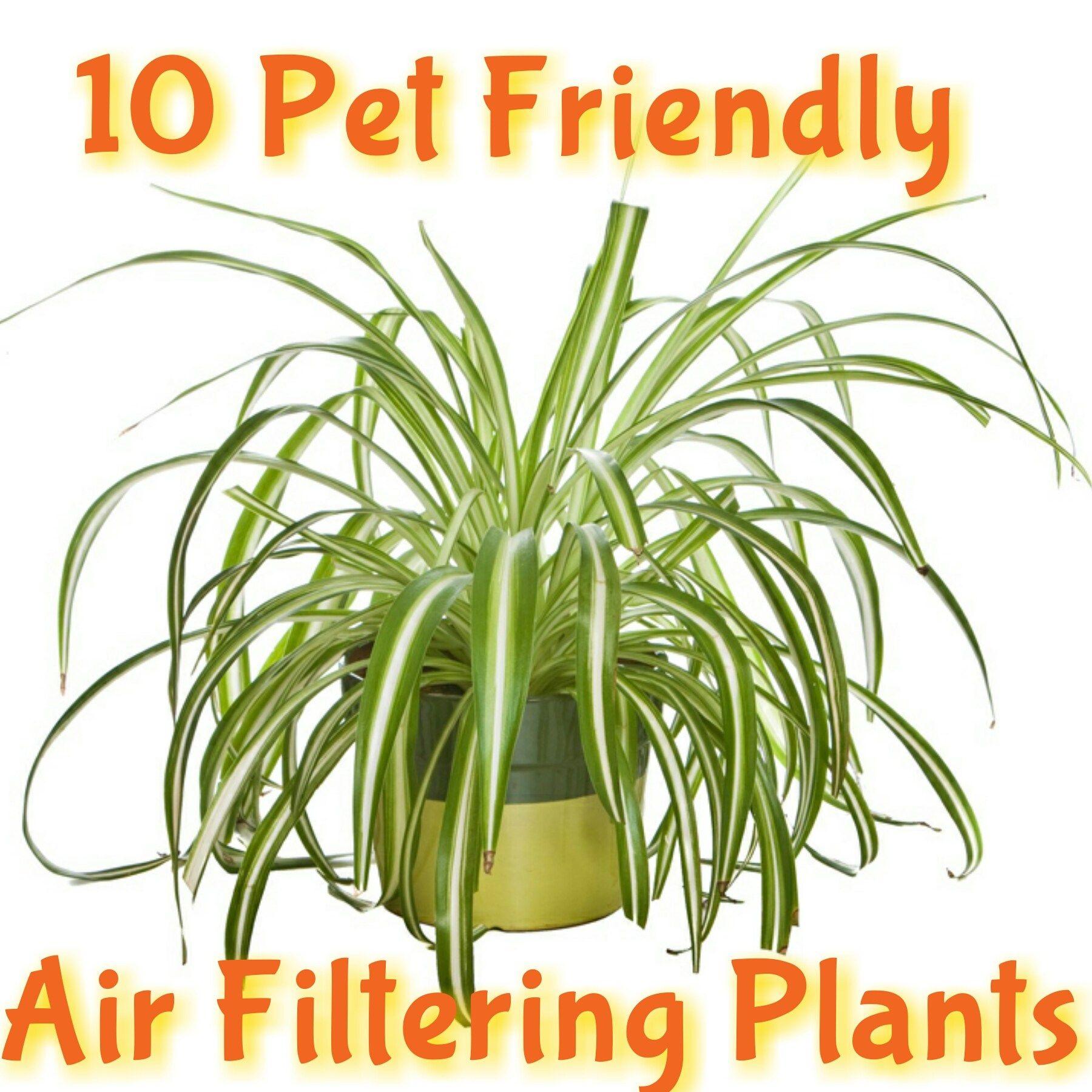 10 Kid Pet Friendly Air Filtering Plants Air Filtering Plants Plants Pet Friendly Indoor Plants Low Light