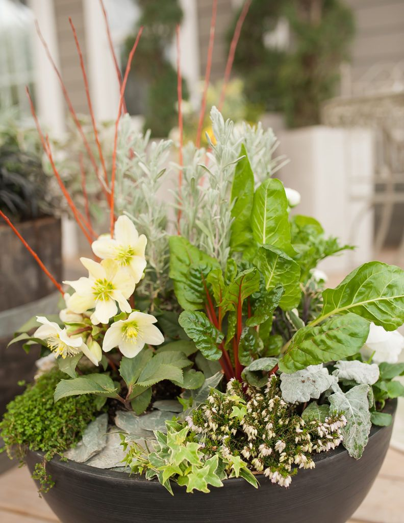 Using Vegetables Herbs In Your Container Gardens Home 640 x 480