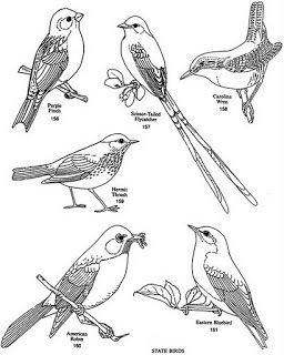 Art at Becker Middle School: Practice drawing birds