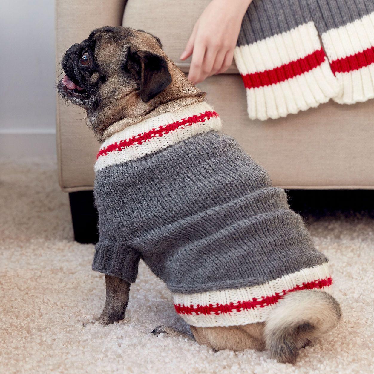 Bernat Knit Work Sock Dog Coat, S | Dog sweater pattern ...