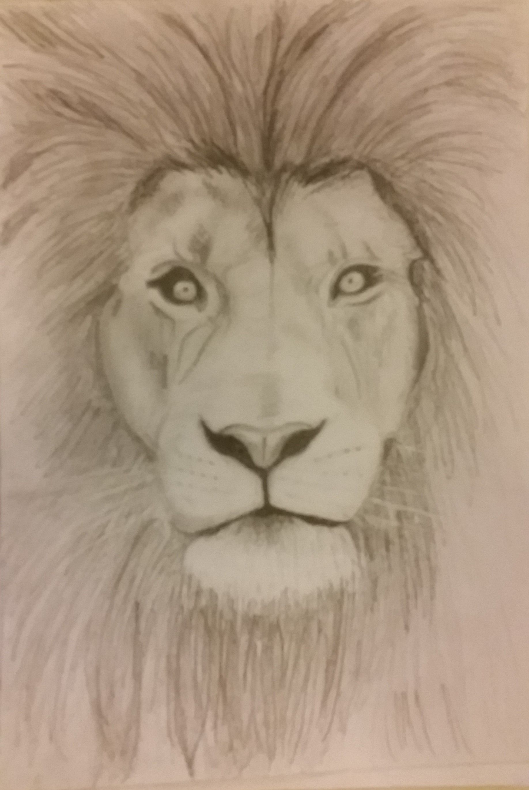 Simple lion sketch drawing with pencil