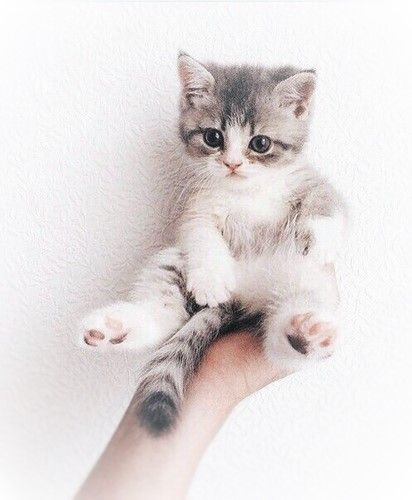 AlinaTomasevic Pinterest Love Life - 29 cute cats that have morphed into cat loaves