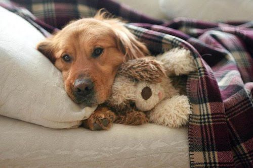 Ich schlaf nicht ohne meinen Kuschelhund