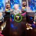 Tyke playing with kitten has got the deepest laugh ever(Video)