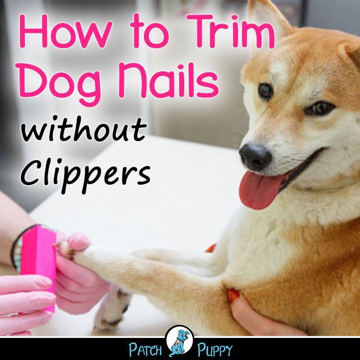 How to trim dog nails without clippers with images