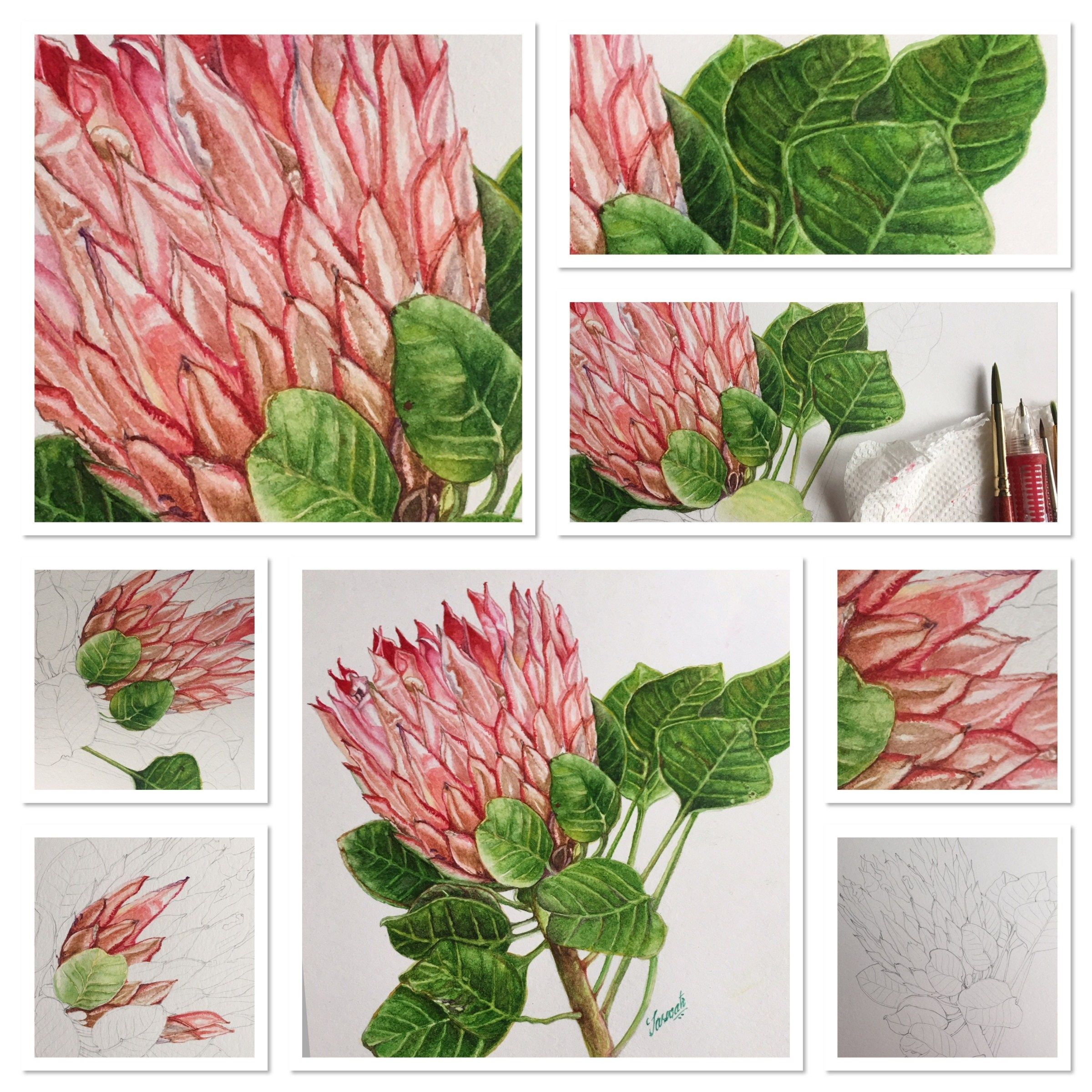 Watercolor Botanical Painting Tutorial Flower Drawing Tutorials