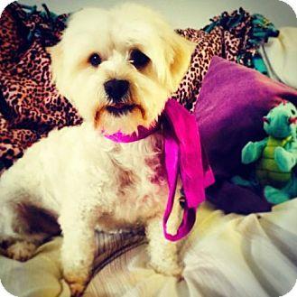 Http Www Arwob Org Address P O Box 712444 San Diego Ca 92171 Http Www Arwob Org Address P O Box 712444 San Diego C Kitten Adoption Dog Adoption Dogs