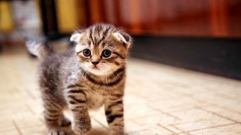 How Long Till Kittens Open Their Eyes With Images Kittens Kittens Cutest Cute Animals