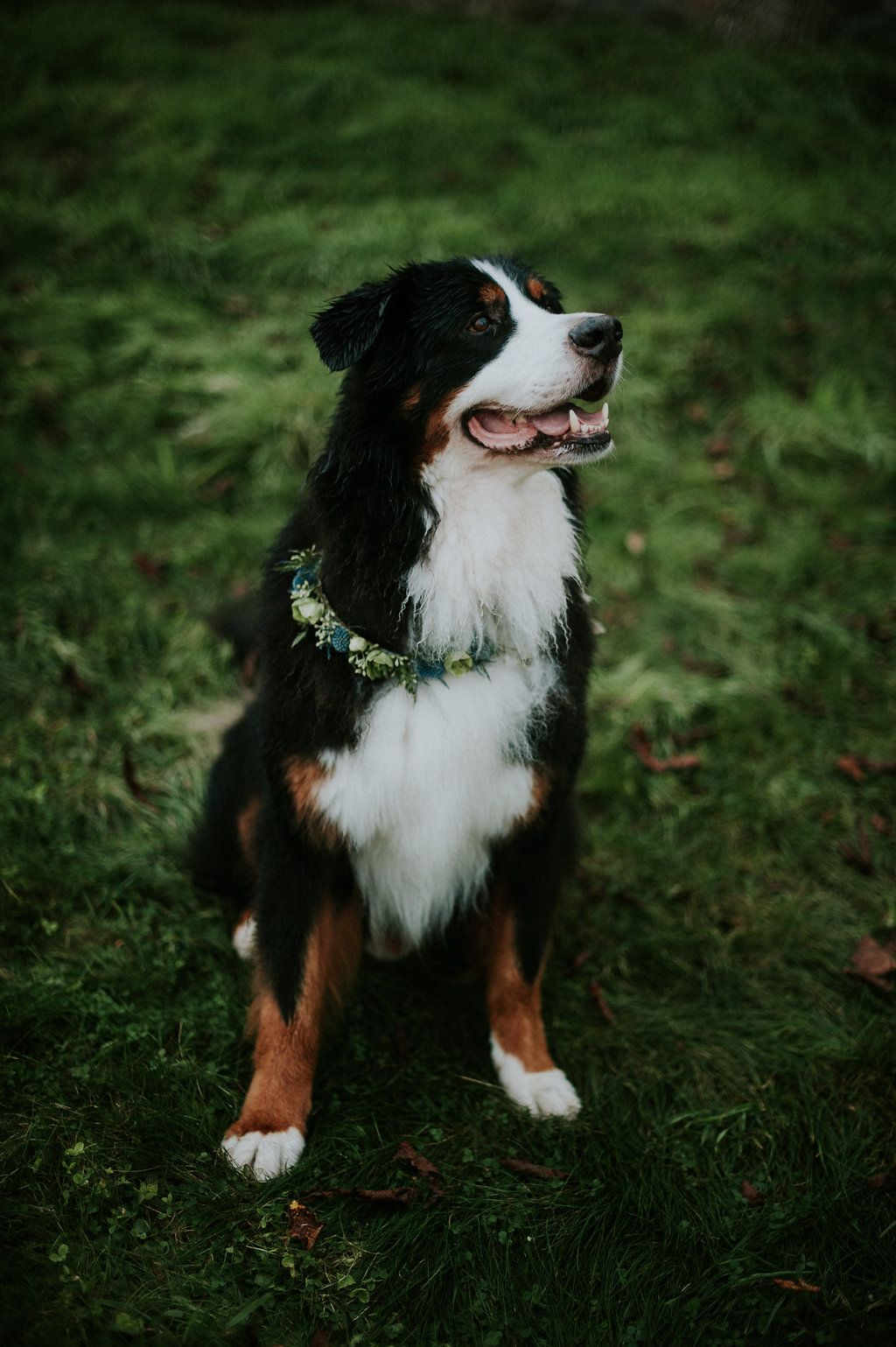 Our Favourite Pets At Weddings Via Elegant Productions Beautiful Dogs Pets Cute Dogs
