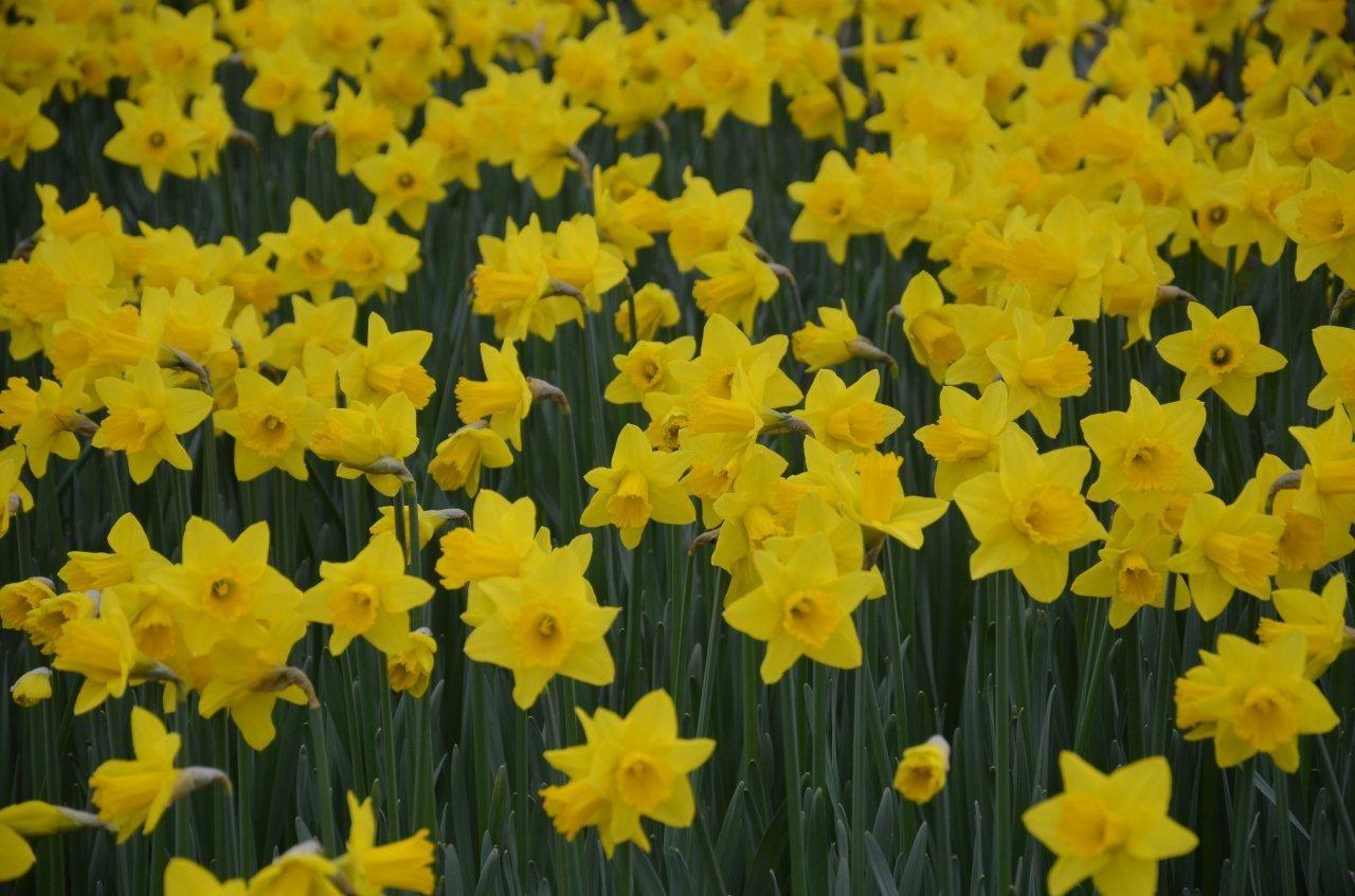 Spring - Photo taken by David Medcalf