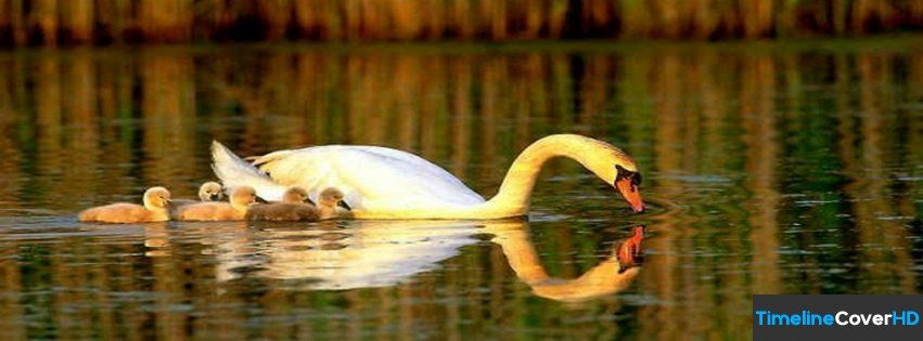Swan Family Timeline Cover 850x315 Facebook Covers - Timeline Cover HD