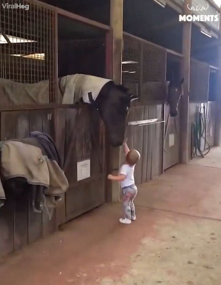 Compilation of cute babies who love the horses. Please follow Animals Board for more videos