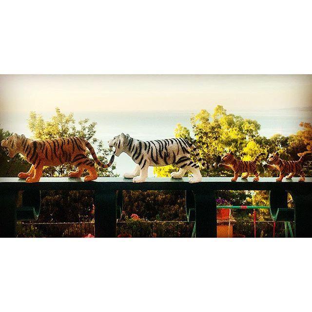 """""""Nella pace nulla di meglio per diventare un uomo che la tranquillità e l'umiltà, ma se tu senti il soffio della guerra allora imita la tigre, indurisci i tuoi muscoli, eccita il tuo sangue, nascondi la tua lealtà sotto la fredda rabbia e infine dà al tuo sguardo l'orribile splendore!"""" Photo taken by @sedeluca on Instagram, pinned via the InstaPin iOS App! http://www.instapinapp.com (10/13/2015)"""