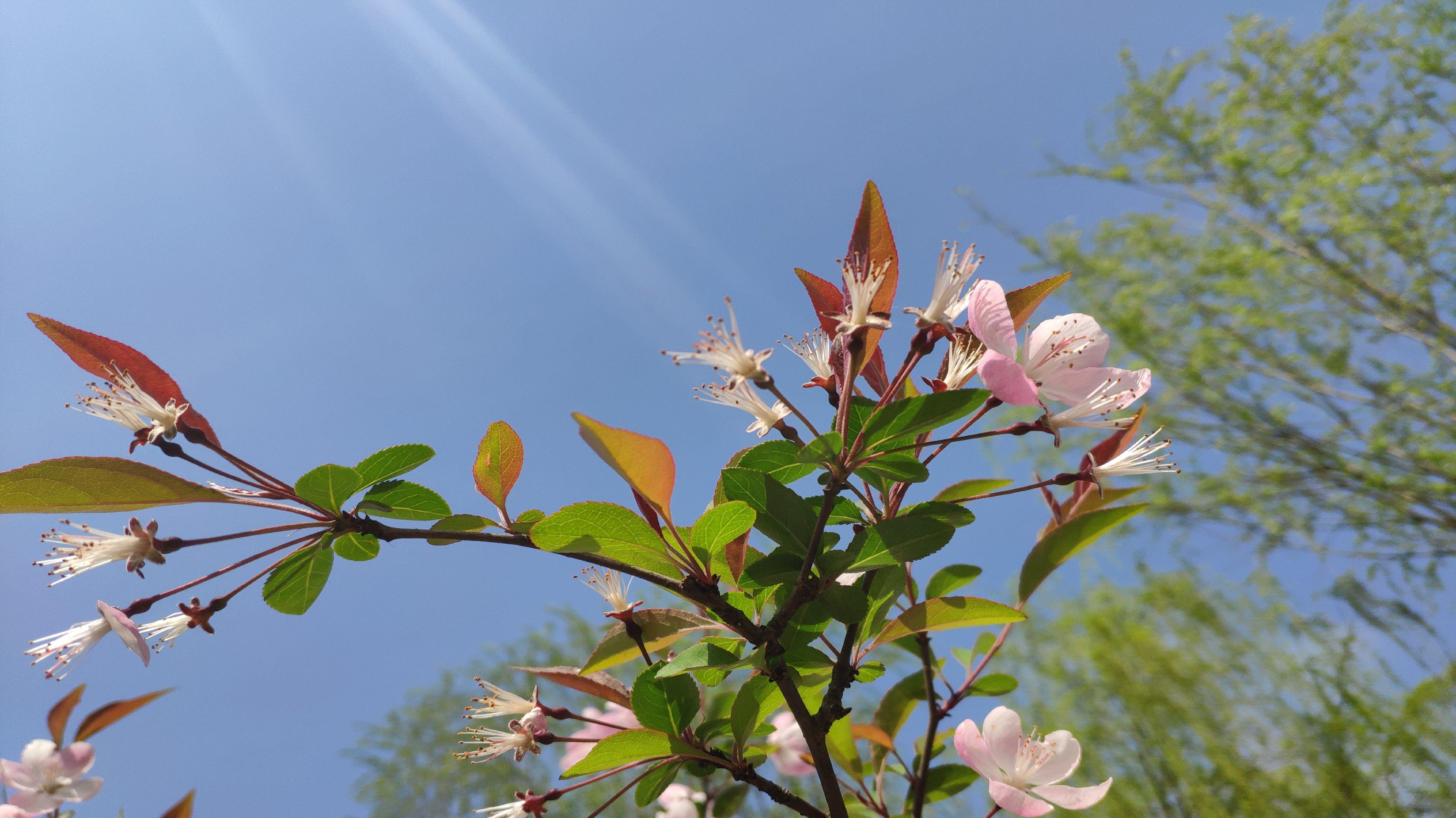 Beautiful Flower 4K wallpaper Beautiful flowers