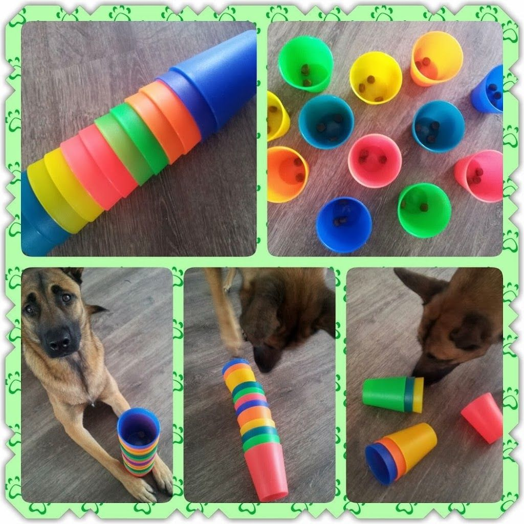 Dress up your pet game - Brain Game 32 Place A Treat Inside Plastic Cups And Stack Up And Let Dog Enrichmentdog Puzzlestraining Your