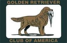 The Golden Retriever Club Of America Bing Images Golden