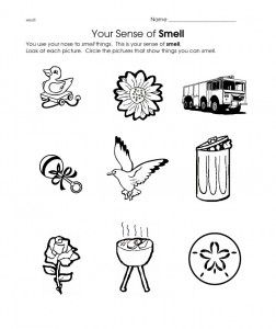 Smell Worksheet Senses Preschool Worksheets For Kids English Worksheets For Kindergarten Smell worksheet kindergarten