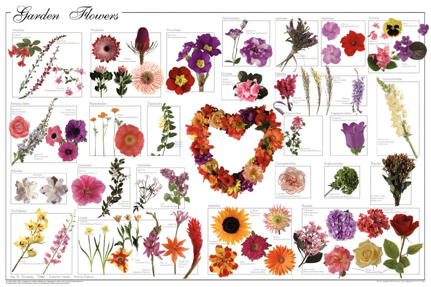 Garden Flowers Poster Flower Posters Prints Art Flower