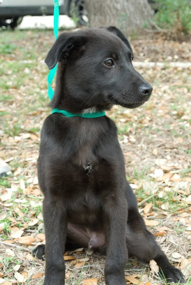Adopt Cheech on Lake animals, Animals, Animal shelter