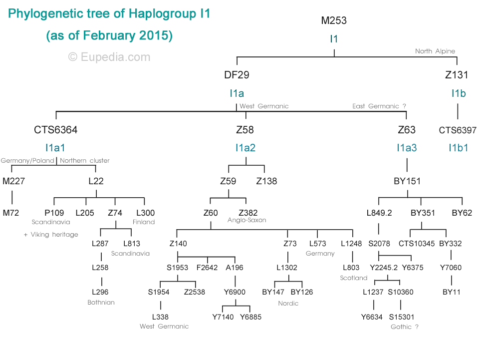 Anglo-Saxon DNA I1a2-Z382 Phylogenetic tree of haplogroup I1 (Y-DNA)