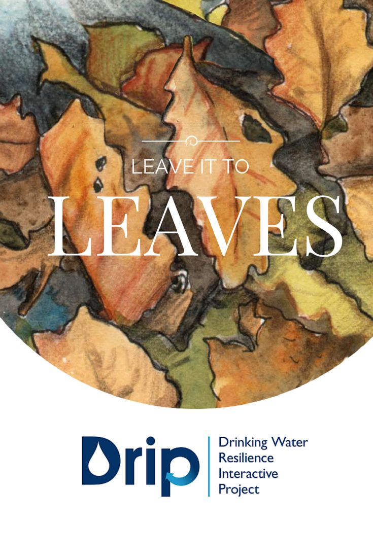 Now that fall is upon us, find out the role leaves play in keeping our drinking water clean with the Drinking Water Resilience Interactive Project (DRIP). #NCwater